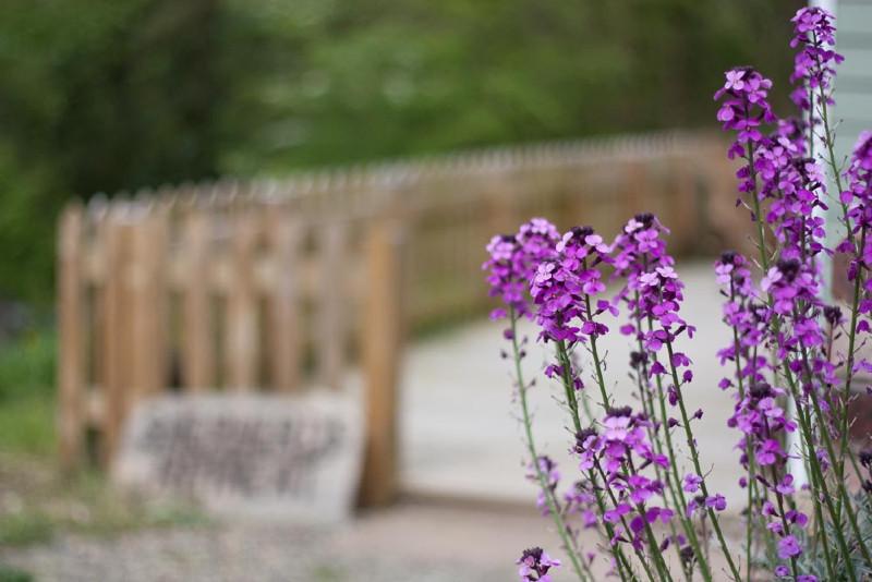 simply-Shepherds-Retreat-Flowers