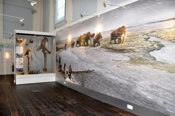 shrewsbury-museum-04