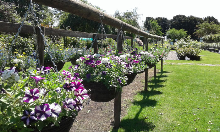 Country-Garden-Plant-Centre-hanging-baskets