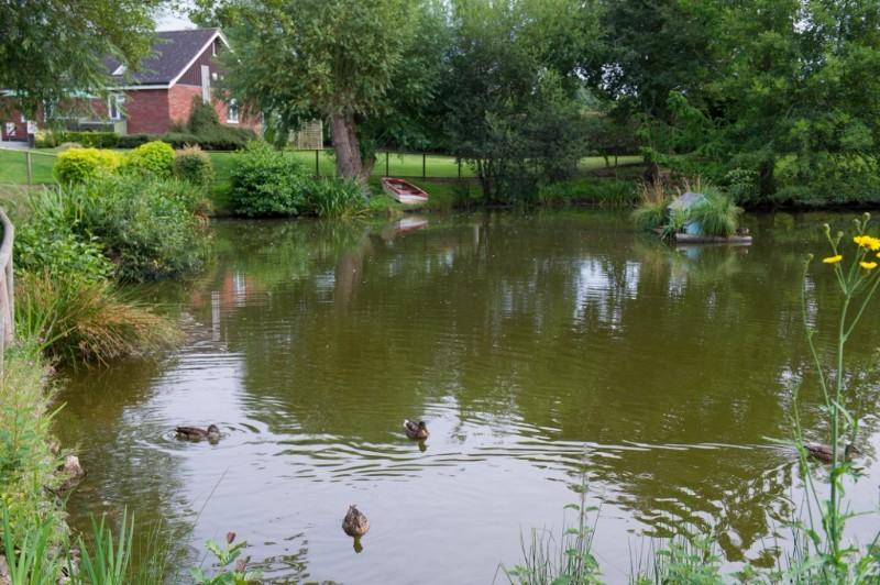 Ducks-in-pond-3-1024x681